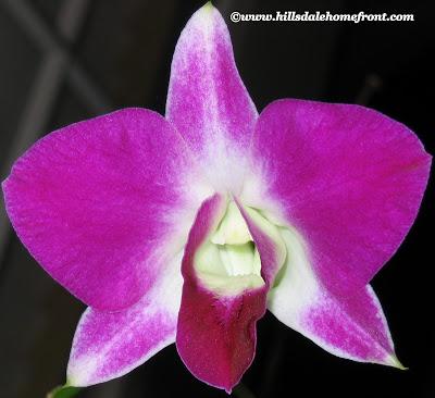 pink pretty flower
