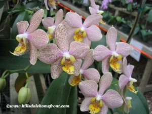 Orchid Friday!