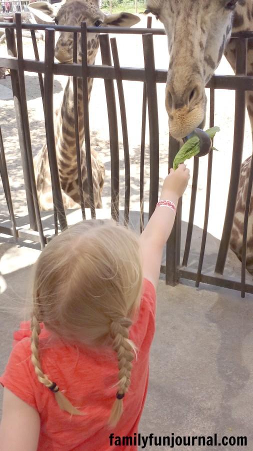 houston zoo feed giraffe