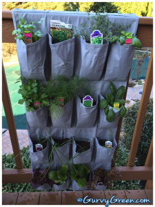 how-to-grow-your-herb-garden-in-a-shoe-rack