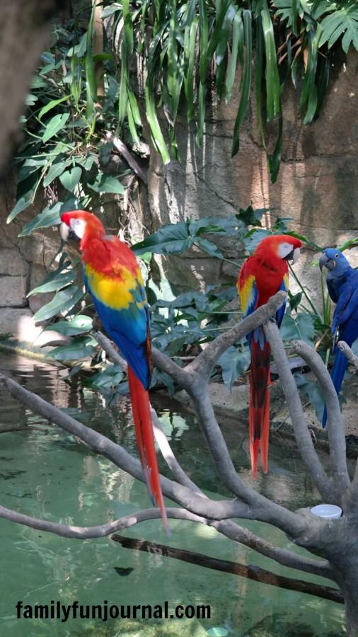 parrots moody gardens