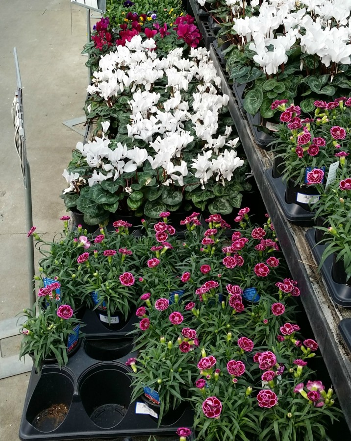 walmart flowers