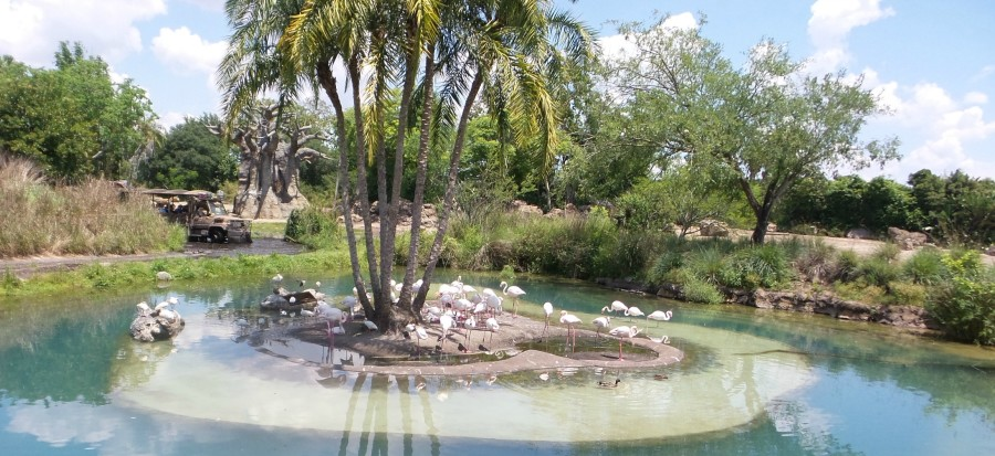 flamingos disney