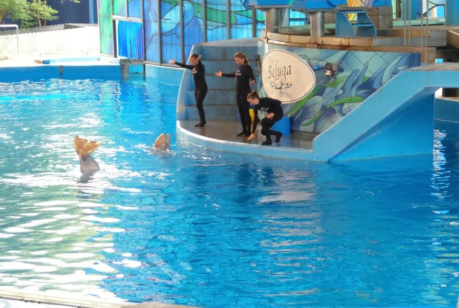 beluga story