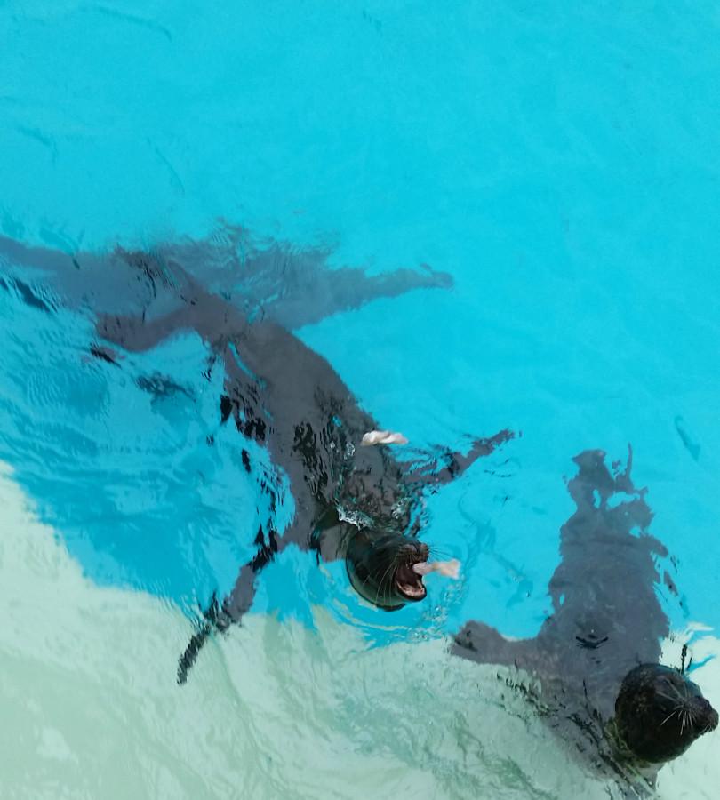 feed sea lions seaworld