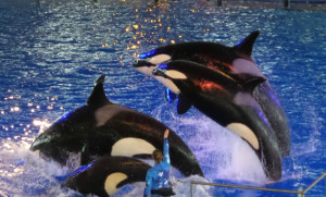 Family Trip To SeaWorld San Antonio