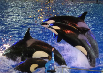Family Trip To SeaWorld San Antonio