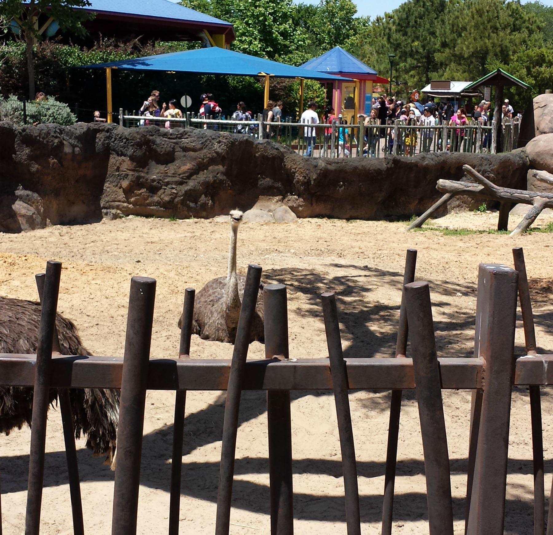 Houston Zoo ostrich